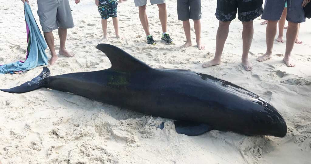 And Dauphin island sperm whale photo with you