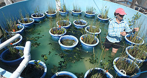ACER scientists study oyster resiliency, plant diversity, and fish feeding habits