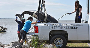 Stranding Network standing by to help distressed marine mammals