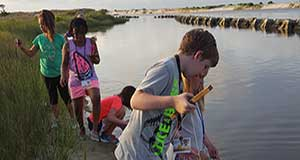 Plan your summer adventure with the Dauphin Island Sea Lab